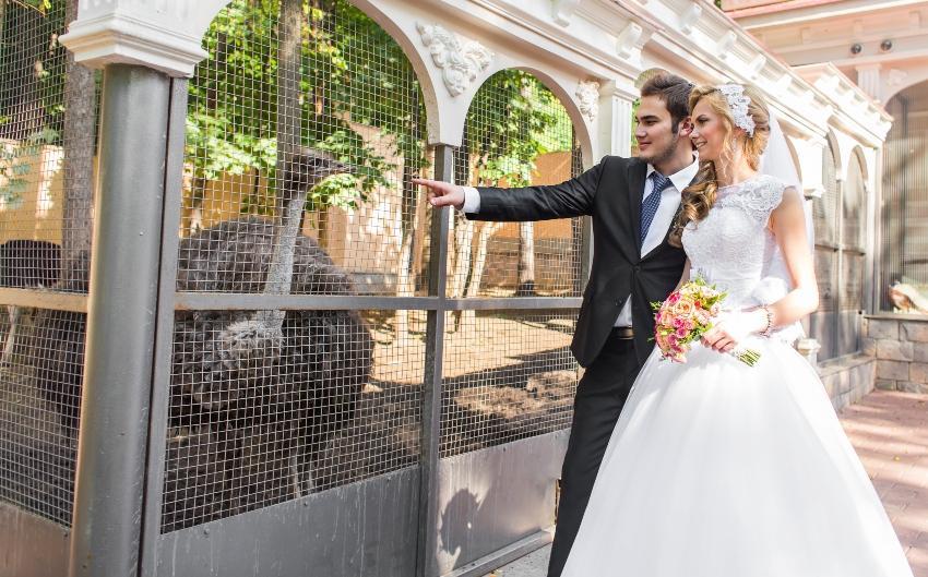 Brautpaar betrachtet Vogel-Strauß - Besondere Hochzeitslocations